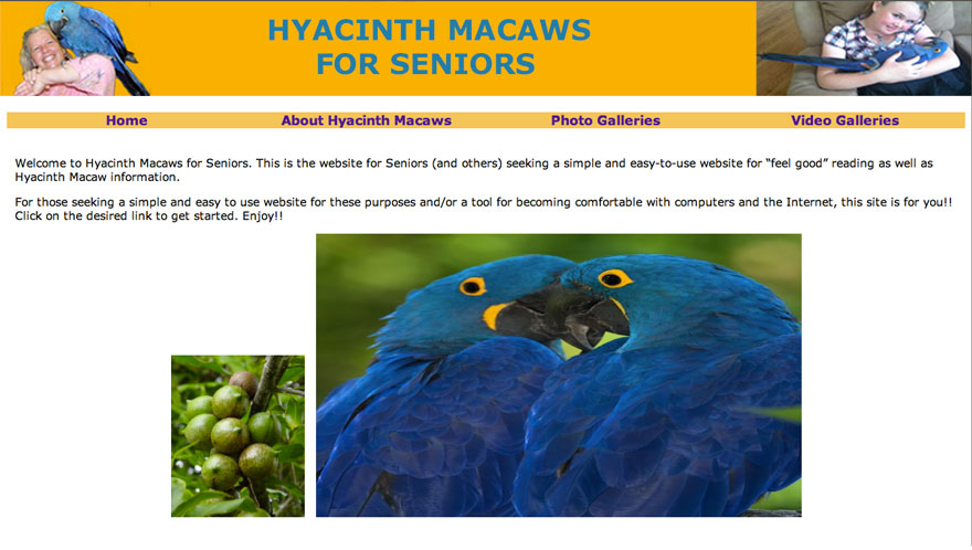 Hyacinth Macaws for Seniors Website thumbnail